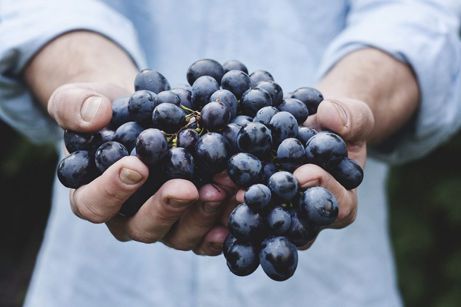 Cata de uvas y variedades
